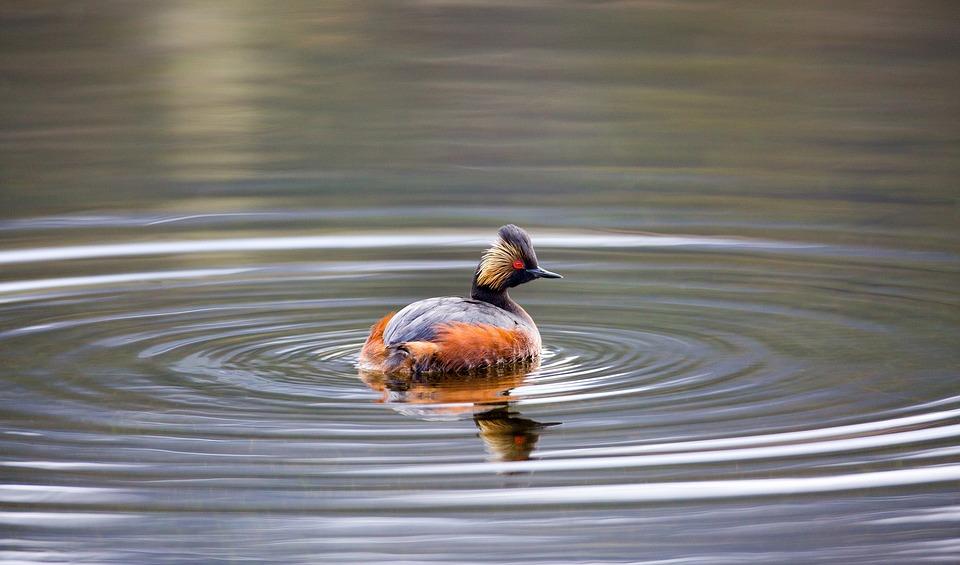 池の中に自分の縄張りを持つイメージ