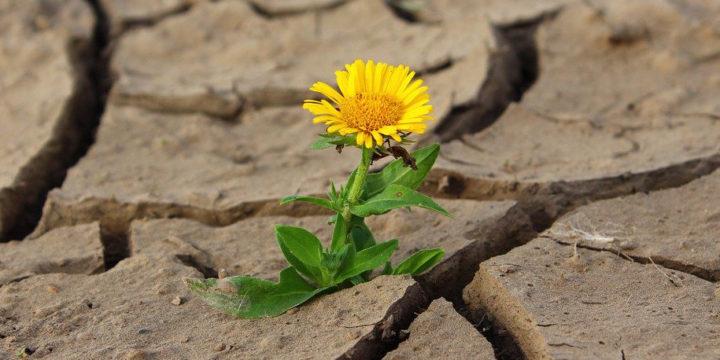 荒れた大地に咲く一輪の花