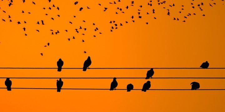 電線にとまる鳥のシルエット