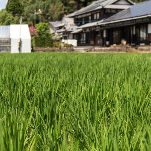 日本のいい田舎の風景