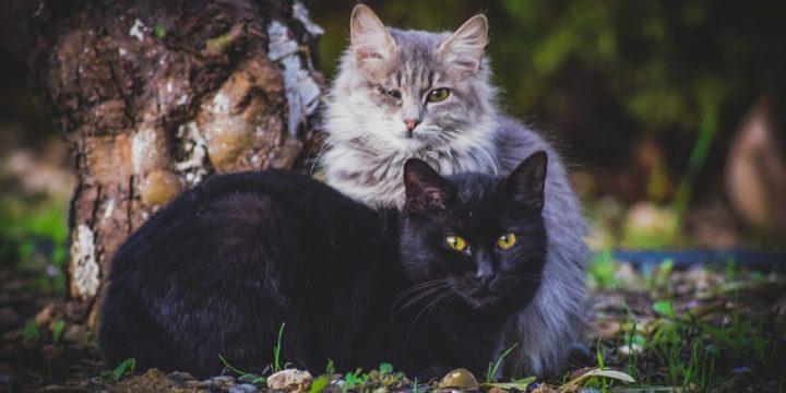 前を見つめる2匹の猫