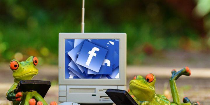 カエルがフェイスブックを見るイメージ